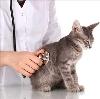Ветеринарные клиники в Вольске